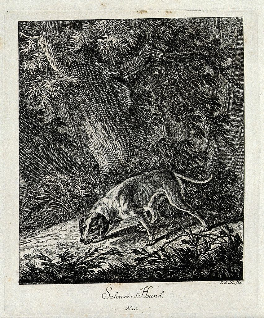 852px-a_bloodhound_sniffing_a_trail_in_the_forest-_etching_by_j-_e_wellcome_v0021040er